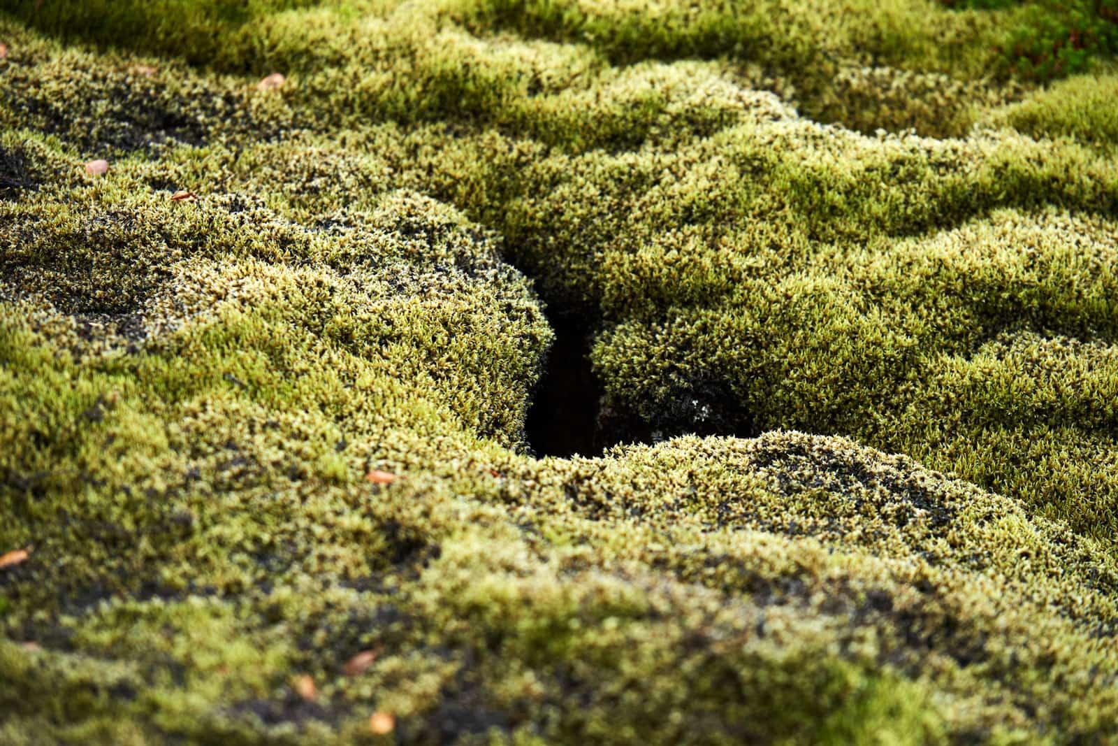grün zugewachsene Erdspalte