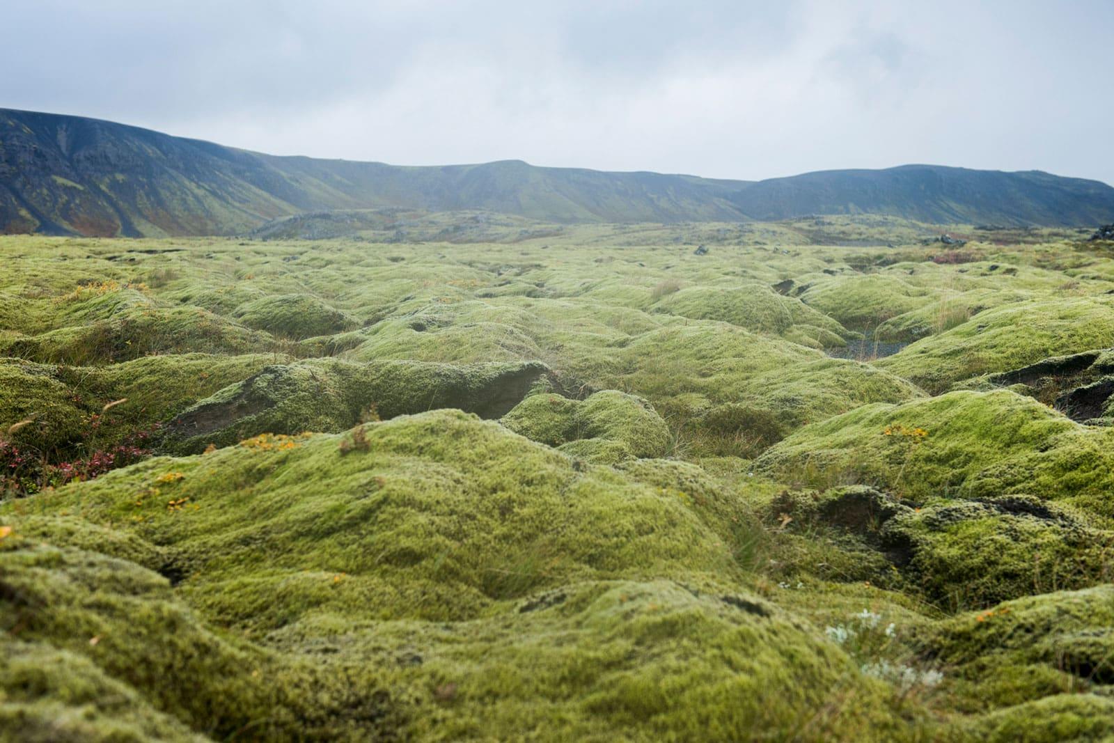 grüne, weichgeschwungene Mooslandschaft