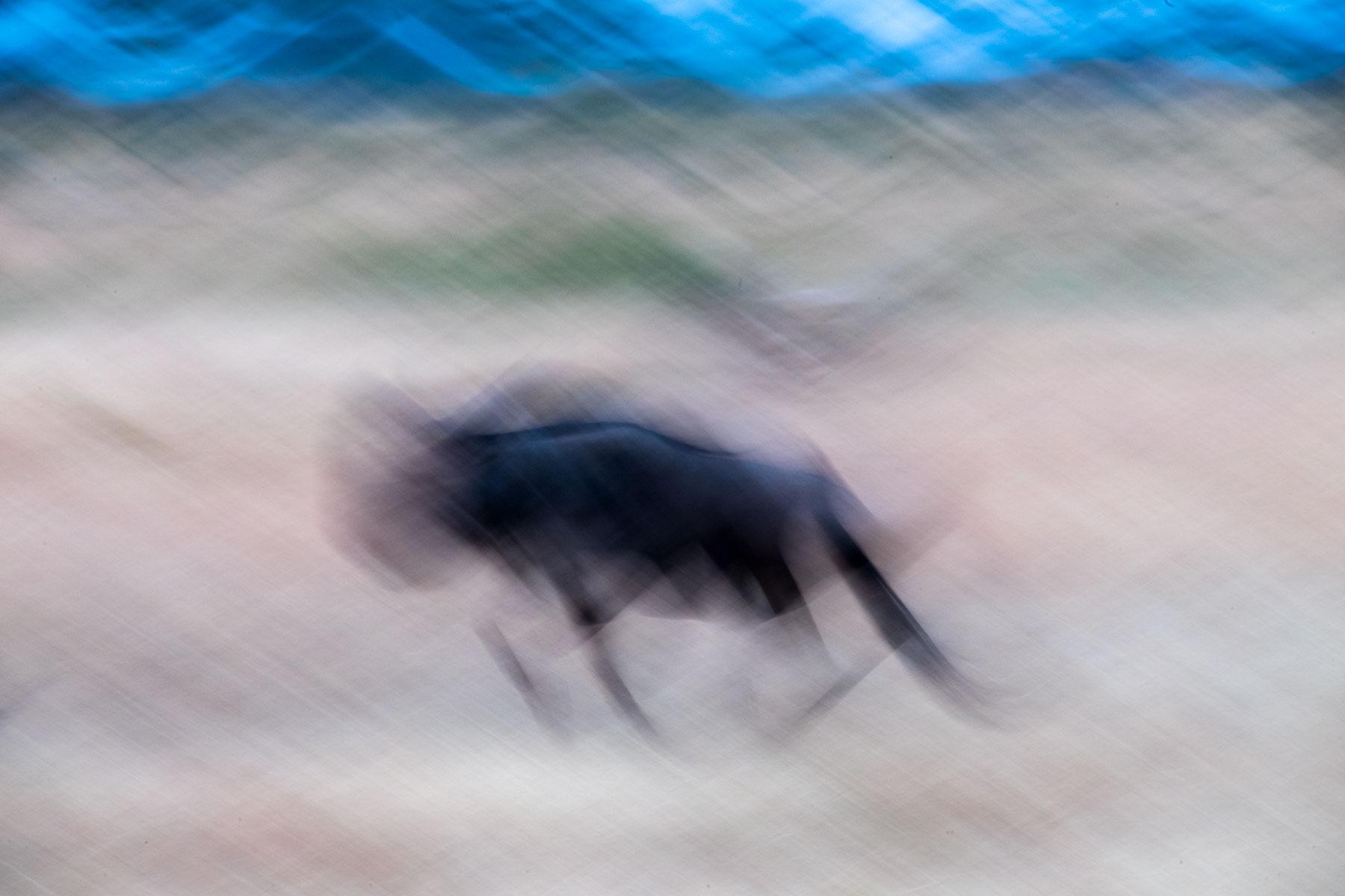 Bild eines bewegungsunscharfen Gnus in bewegender Serengeti