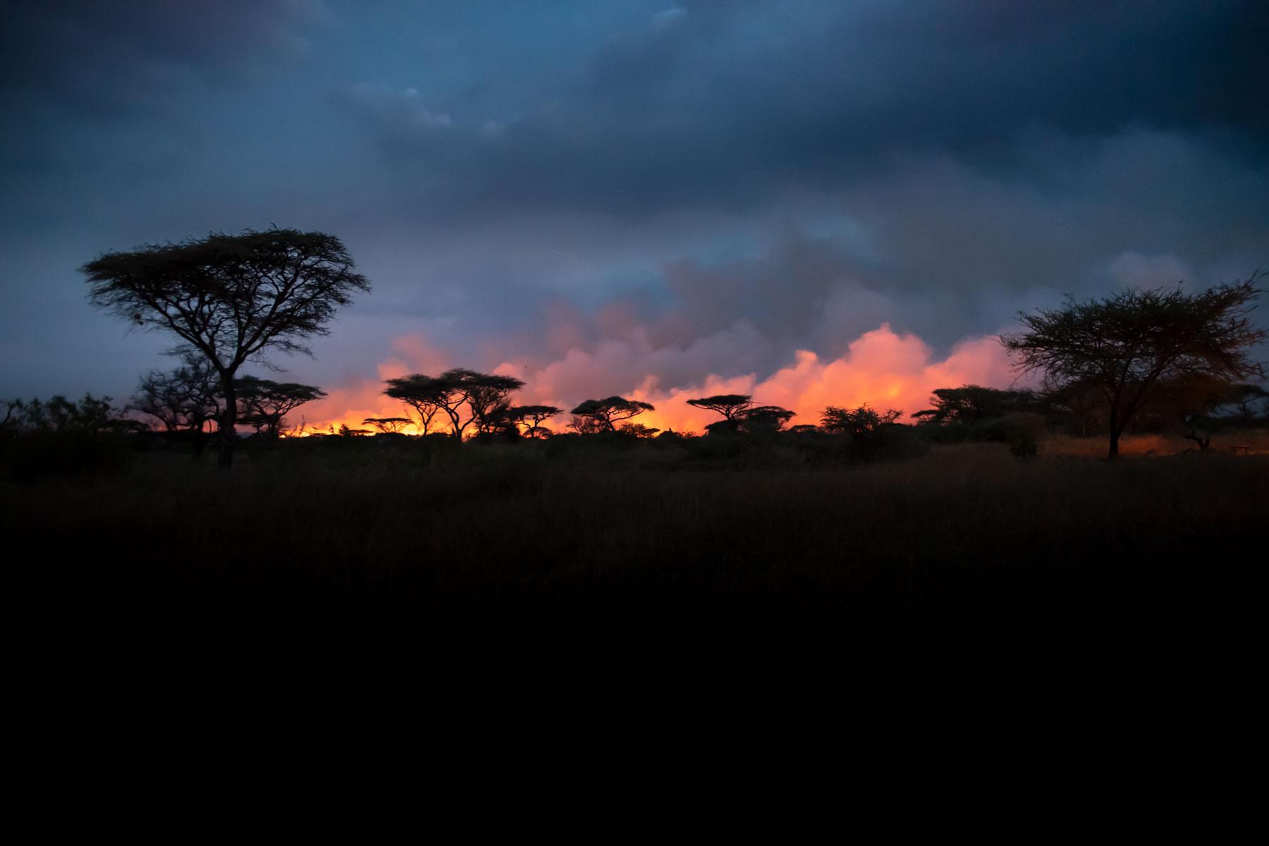 Bild der leuchtend brennenden Serengeti am Abend