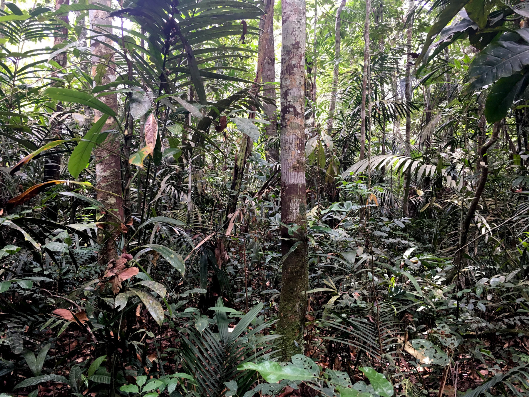 Foto vom grünen, undurchdringlichen Regenwald