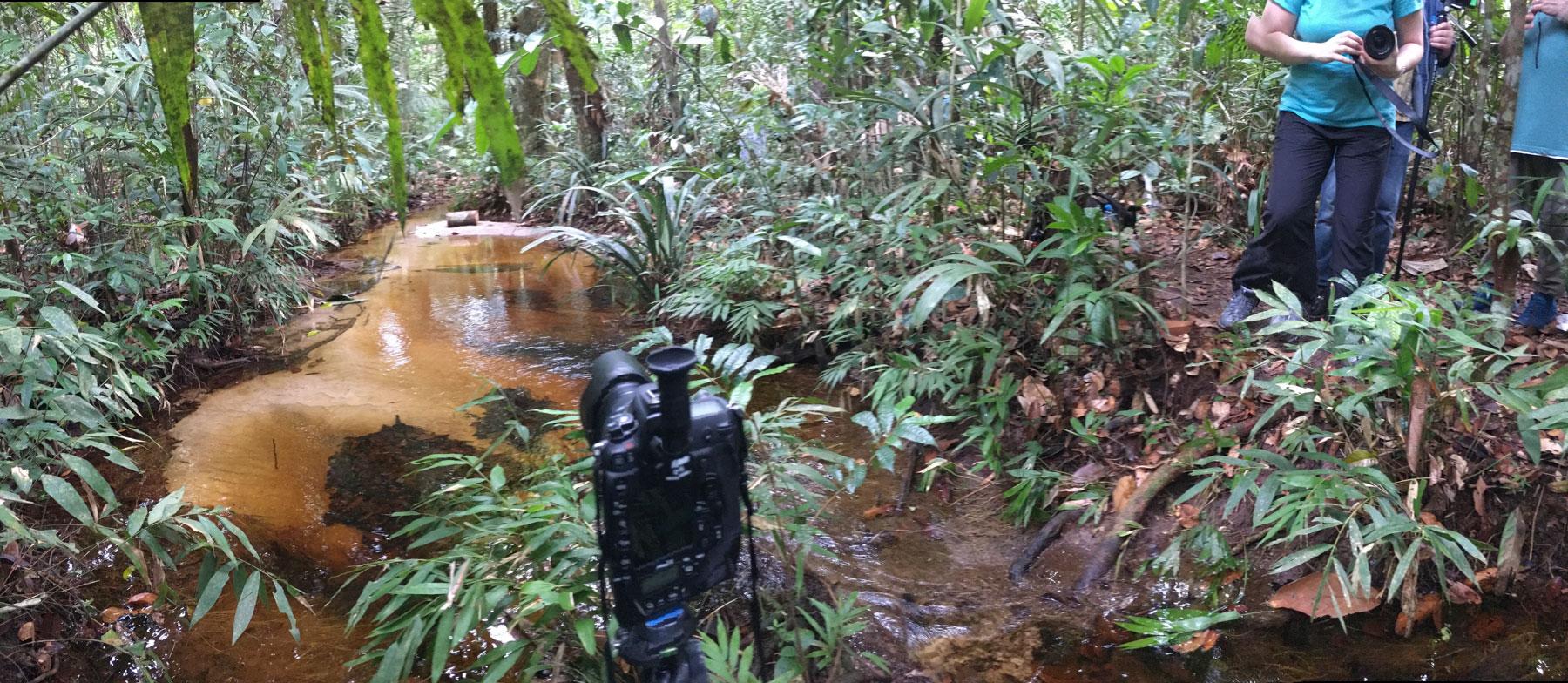 Momentaufnahme im Regenwald einer Fotogruppe an einem kleinen Bach