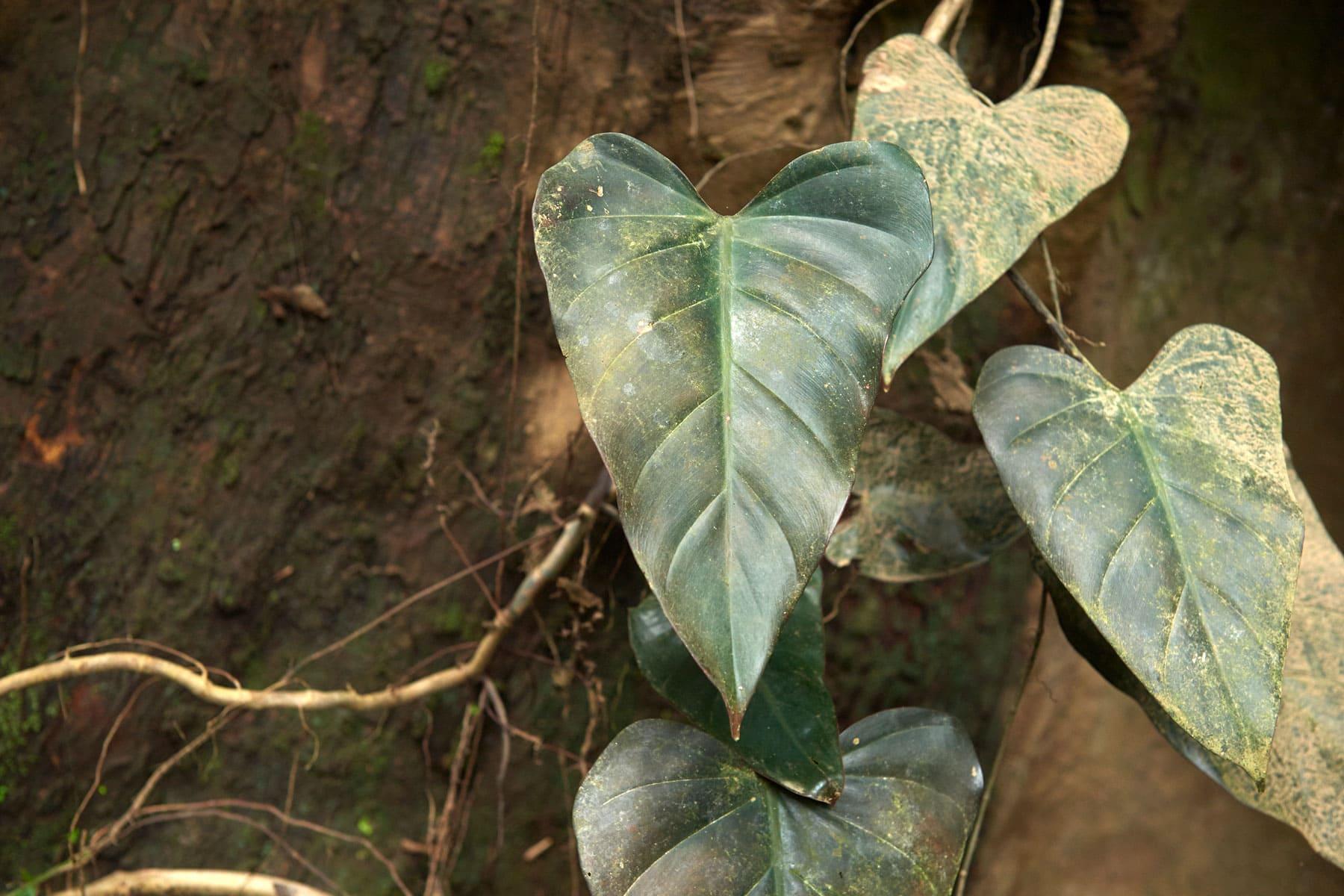 Foto grüner sonnenbeschienenden Regenwaldblätter