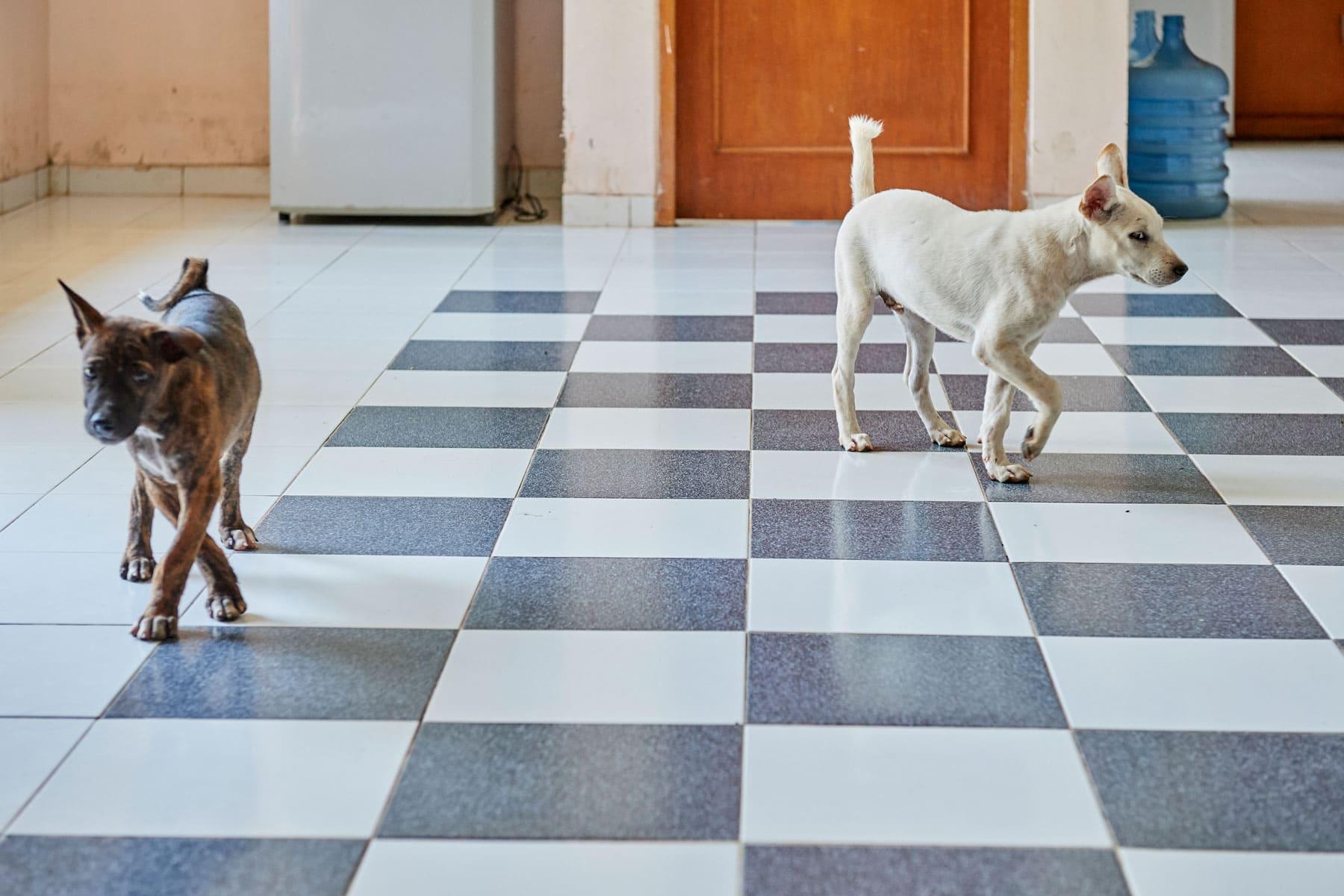 Bild zweier Hunde, die, als sie den Fotografen sehen, jeweils die Richtung wechseln
