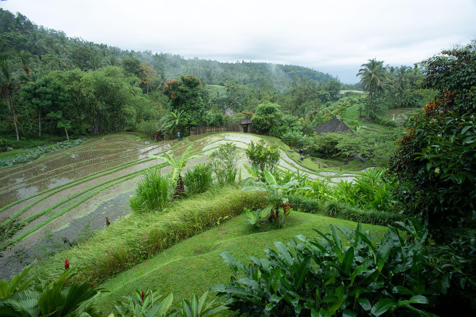 Das Bild zeigt Reisfelder von oben in typischer asiatischer Landschaft