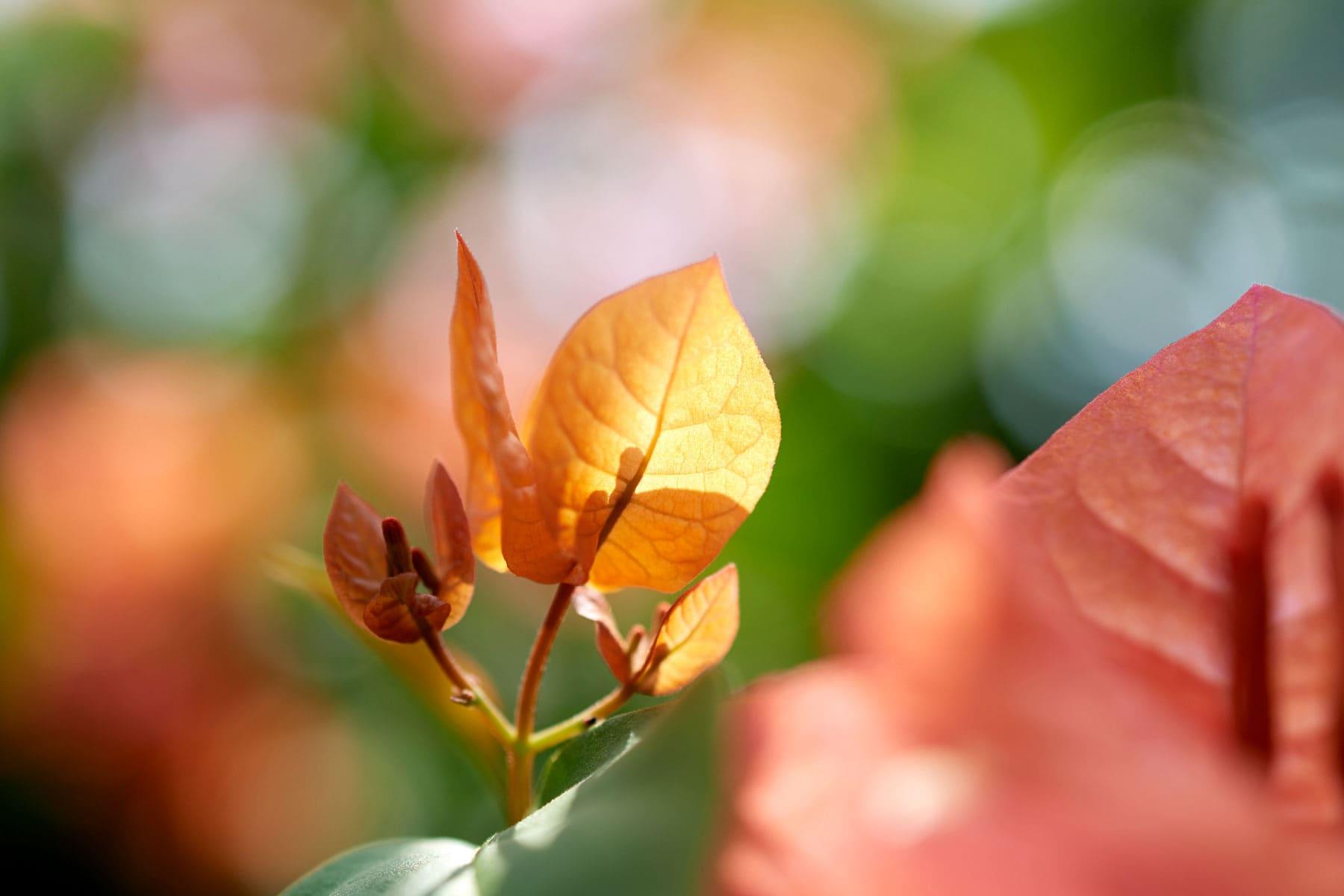 Bild eines goldgelben Blattes im sonnigen Gegenlicht