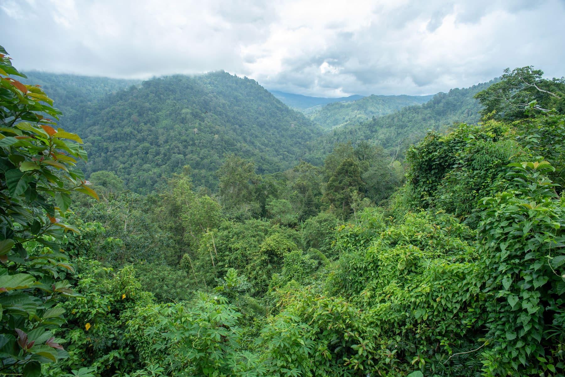 Ein Bild von einem grünen, hügeligen Regenwald von oben mit schönem Wolkenhimmel
