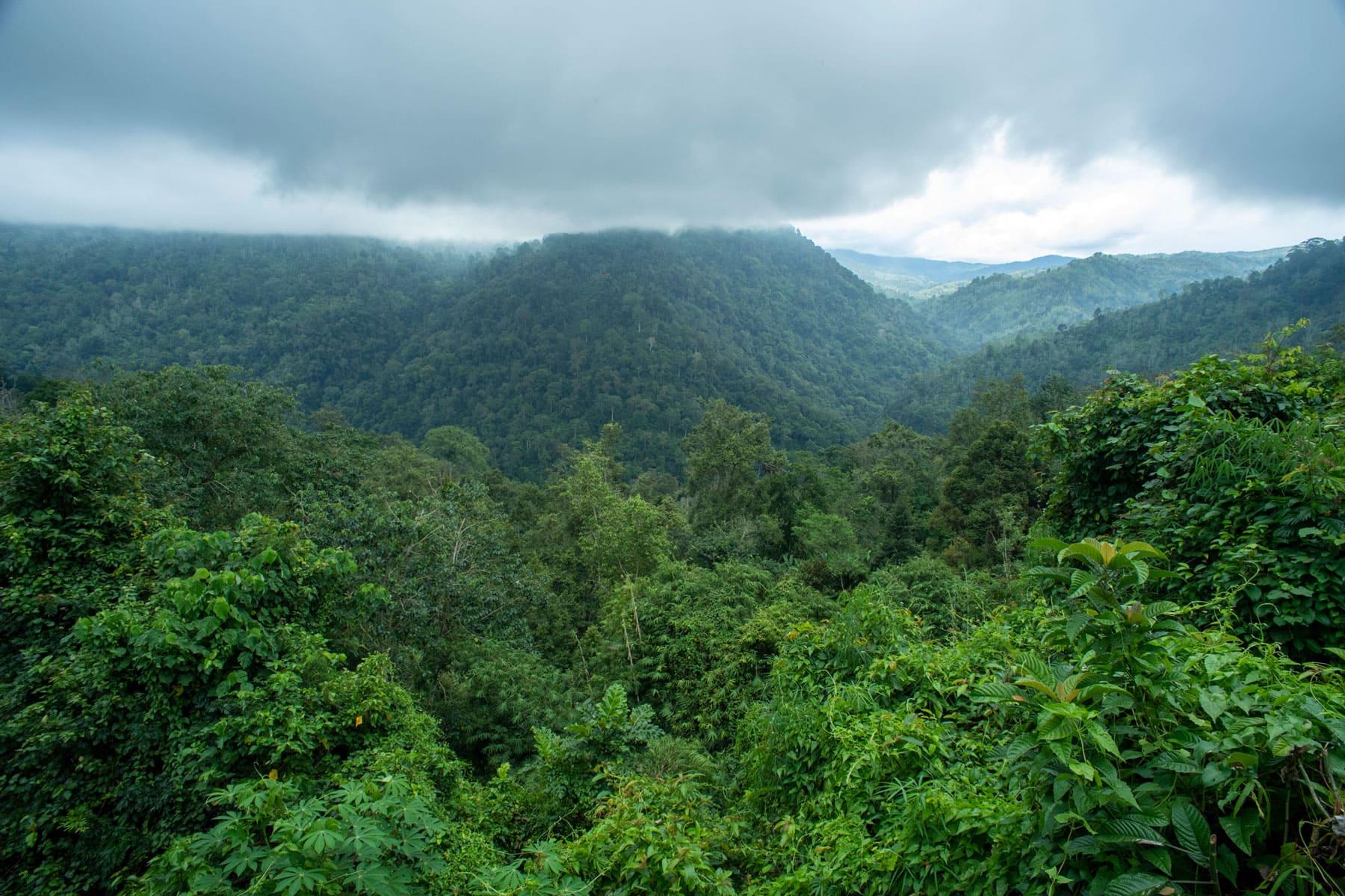 Ein Bild von einem grünen, hügeligen Regenwald von oben mit bedrohlichen Wolkenhimmel